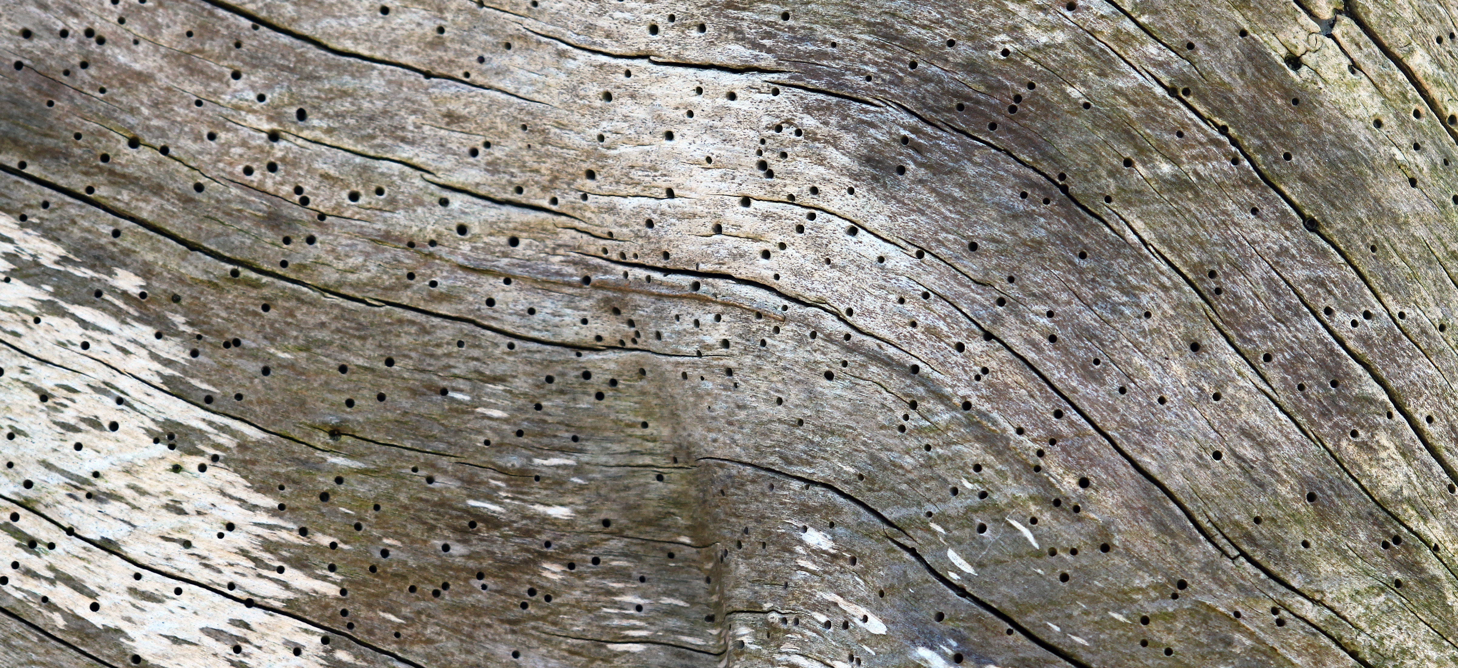 Wood_Grain_Crop_1