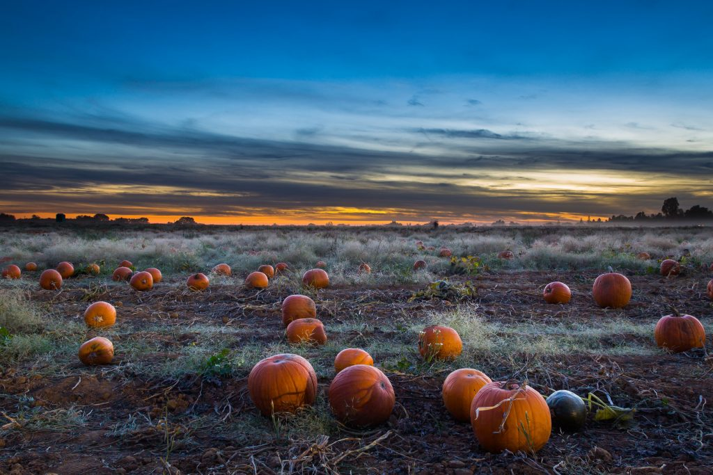Scattered pumpkins lay in a misty field, eerily highlighted by the dark blue sky, as distant trees sit silhouetted by final rays of dusk.