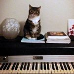 What My Deaf Cat Taught Me About Sound