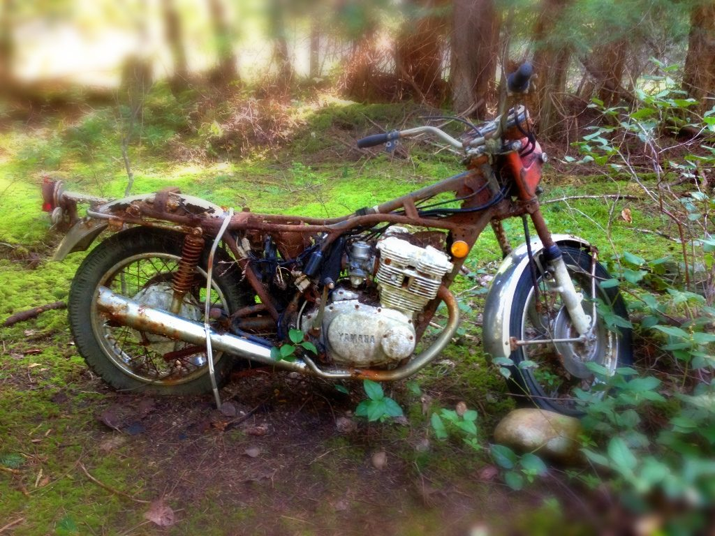 The lush green forest eats away at the motorcycle's rusty steel body.
