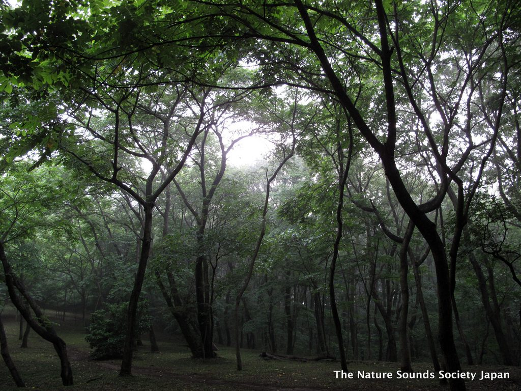 Trees wind into the fog set high into the atmosphere. Article edited by Adriane Kuzminski.
