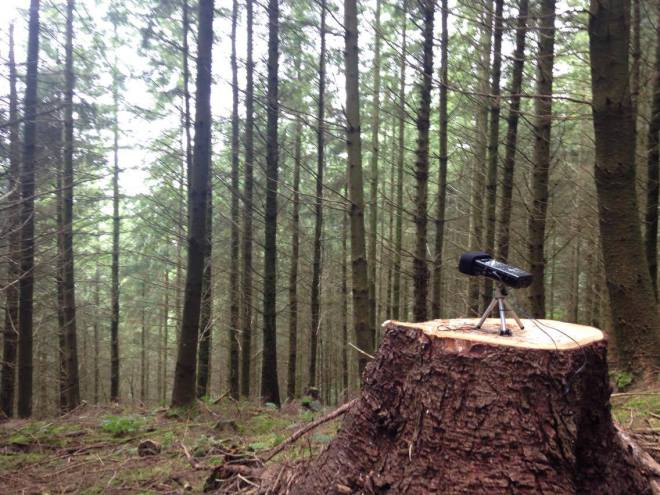 A microphone sits on a stump in a hazy evergreen forest. Article written by Adriane Kuzminski.