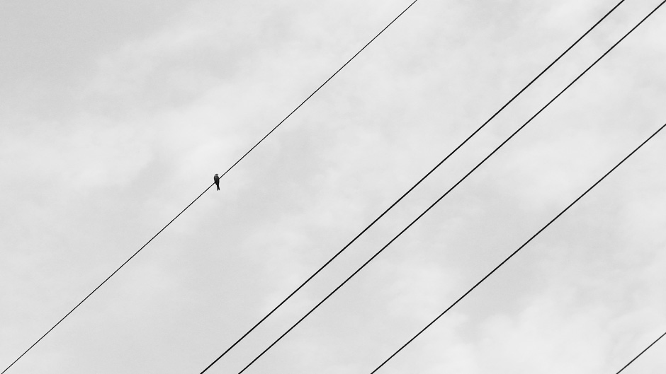 Four telephone wires cross the sky with a bird perched upon one.