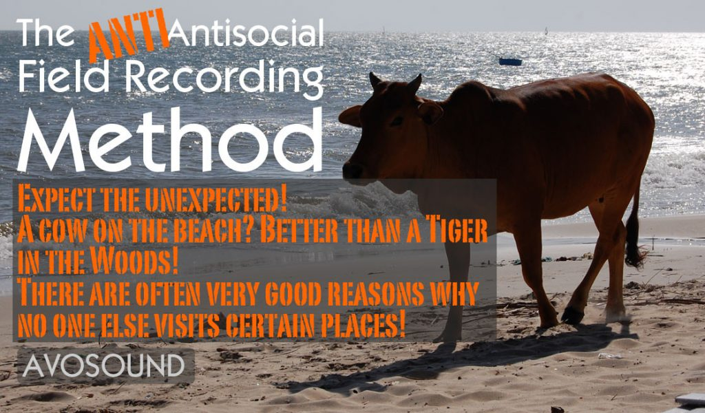 A cow on a beach? Better than a tiger in the woods! There are often very good reasons why no one else visits certain places!