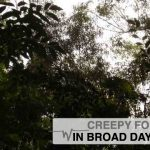 Bruce Tanis Special: Creepy Forests in Broad Daylight