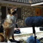 Chuck Russom FX Releases Dogs SFX Library