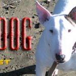 The Recordist's Devil Dog