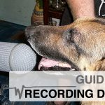 Rob Nokes Special: Guide to Recording Dogs