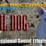 A Few Independent Animal Sound Libraries To Check Out