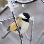 News: The Evocative Aves