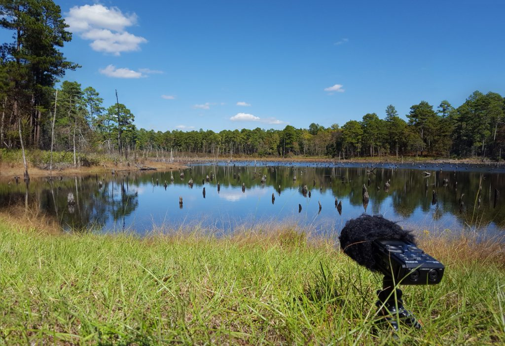 A Roland recorder sits alongside a boggy pond on a sunny day. Article by Adriane Kuzminski.